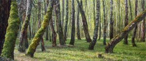 Painting, Landscape - Old Forest