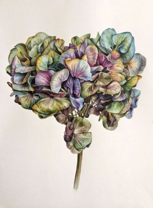 Graphics, Watercolor  - Heart of hydrangea