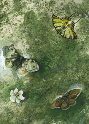 Painting, Animalistics - Butterfly Effect