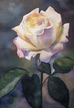 Graphics, Still life - Rose