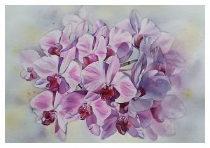 Graphics, Still life - Watercolour «Pink orchid»