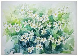 Graphics, Still life - Watercolorpainting with Jasmine
