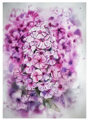 Graphics, Still life - Watercolour «Phlox»