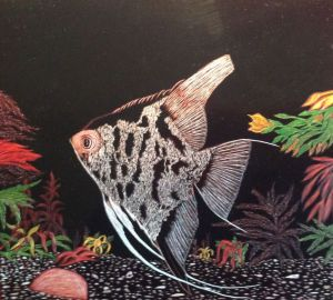 Graphics, Modern - Angelfish